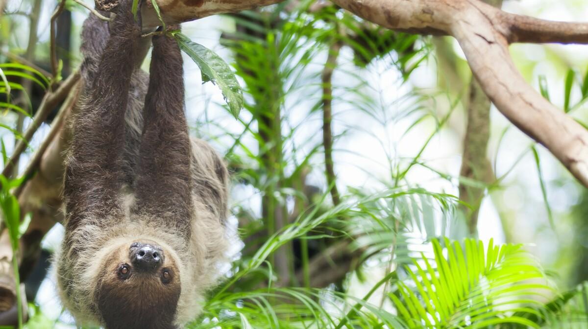 Kostarika, ljenivac, garantirani polasci, putovanja sa pratiteljem, vođene ture