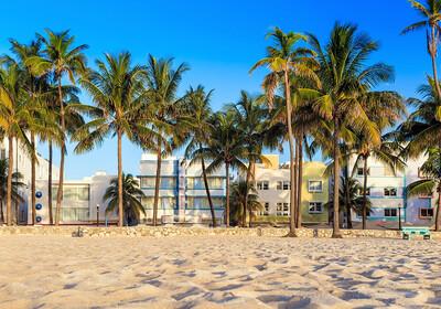 Palme na pješčanoj plaži, Miami beach, putovanje Florida, daleka putovanja, garantirani polasci
