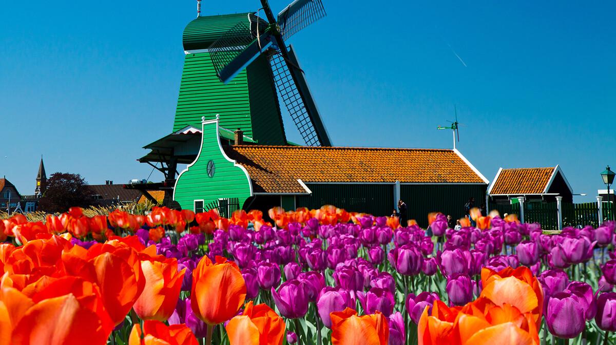 Polja tulipana i stare vjetrenjače, putovanje u Amsterdam