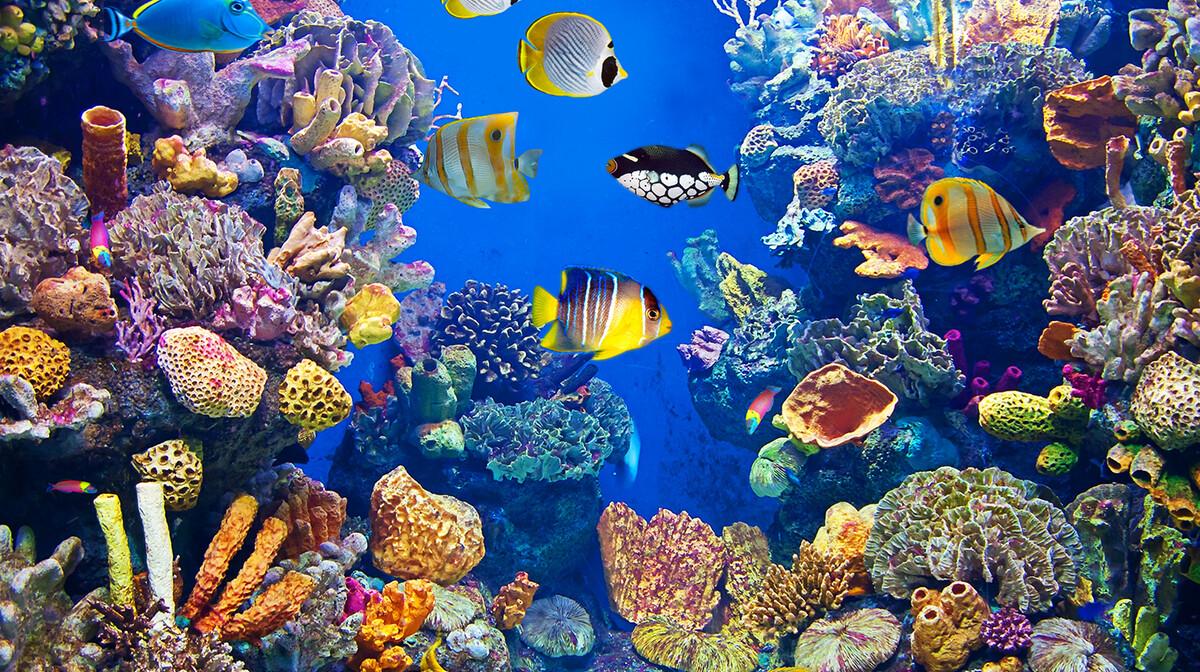 Šarene ribice u Crvenom moru, putovanje Egipat, ljetovanje, mondo travel, garantirani polasci