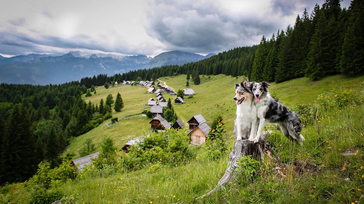 Velika planina, putovanje iz kolekcije Upoznajmo Sloveniju, garantirani polasci