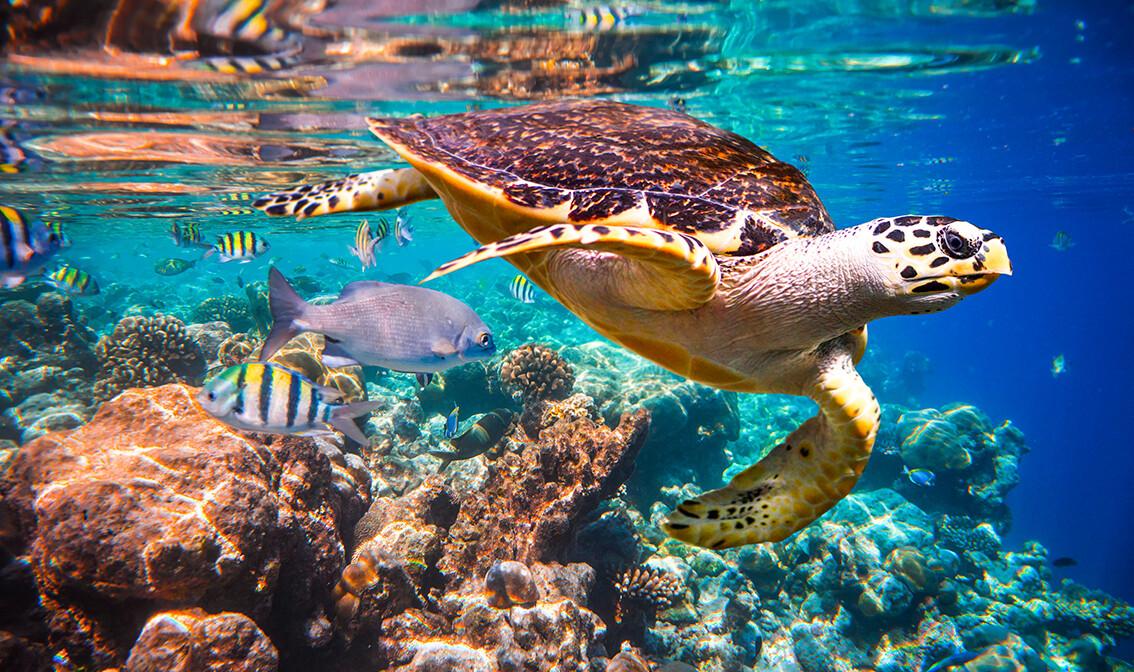 Putovanje Maldivi, individualni polasci, daleka putovanja