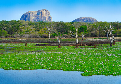Šri Lanka, Yala