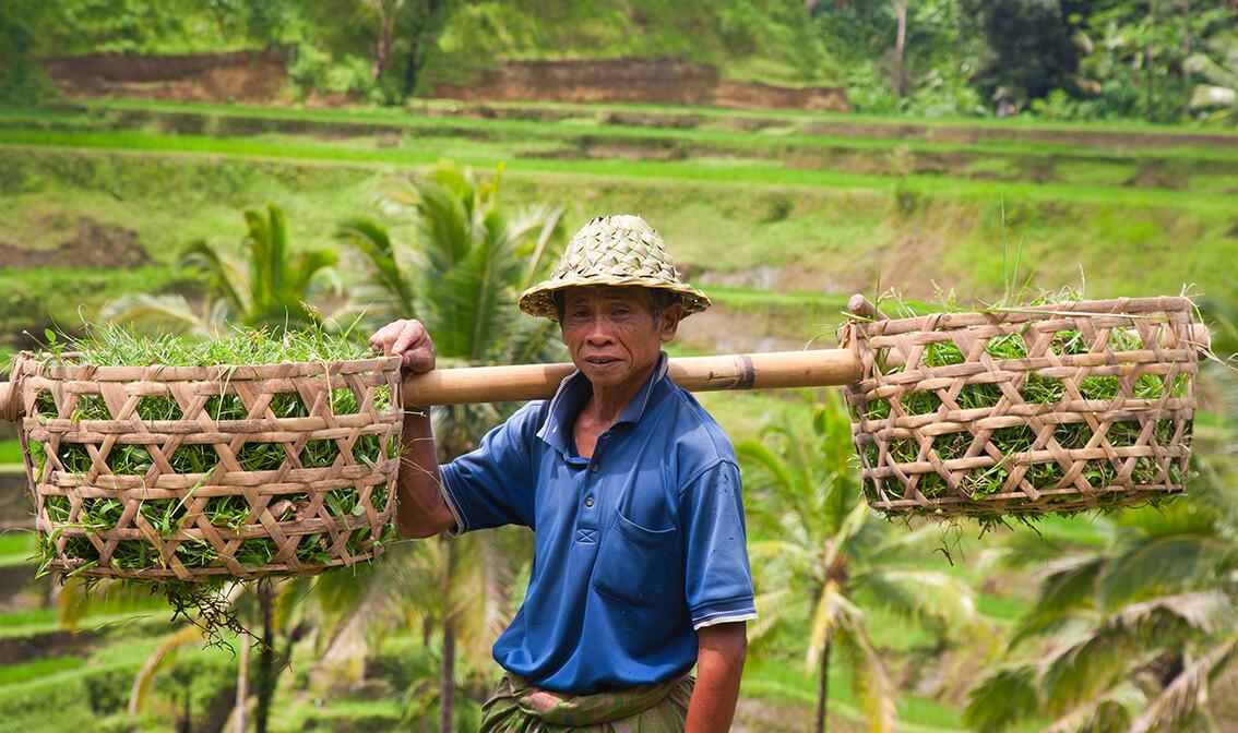 uzgajivač riže na Baliju, putovanja zrakoplovom, Mondo travel, daleka putovanja, garantirani polazak