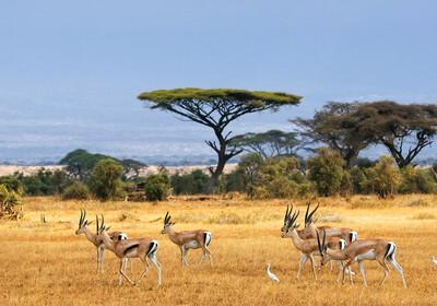 Južna Afrika, Mabula