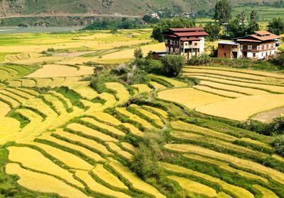 Butan,Punakha