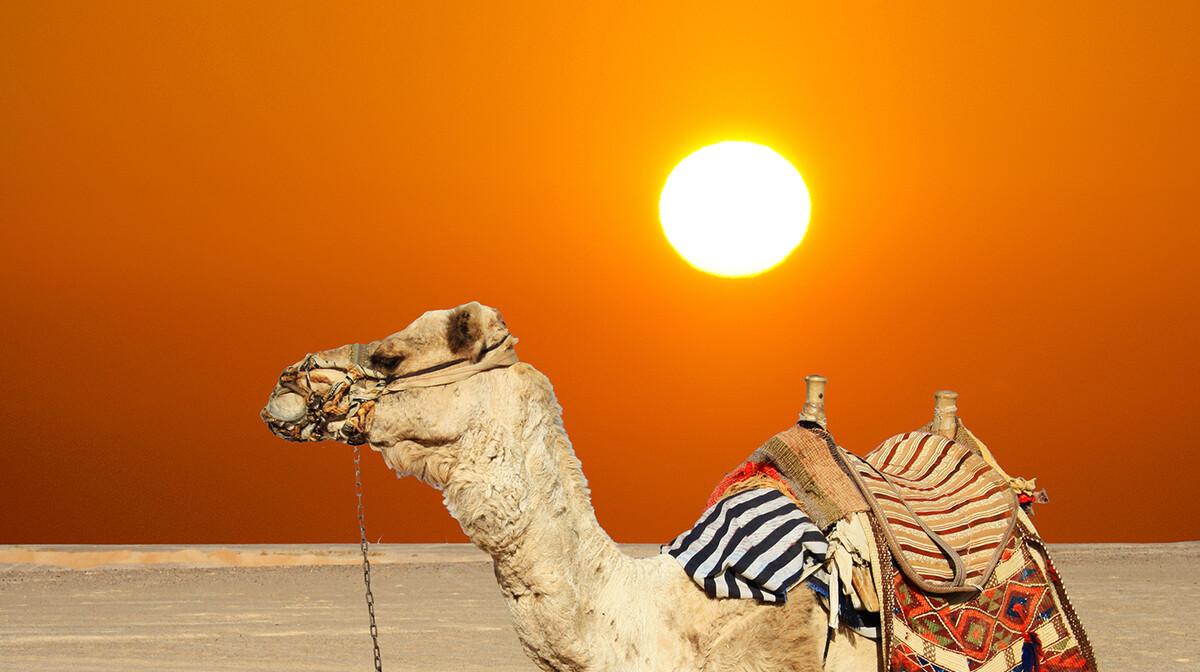 Deve u dolini piramida, putovanje i ljetovanje Egipat, krstarenje medietran, garantirani polasci