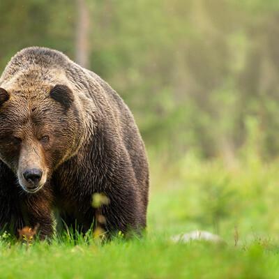 Putovanje Lika i Velebit, medvjed, garantirani polasci, putovanje sa pratiteljem, vođene ture