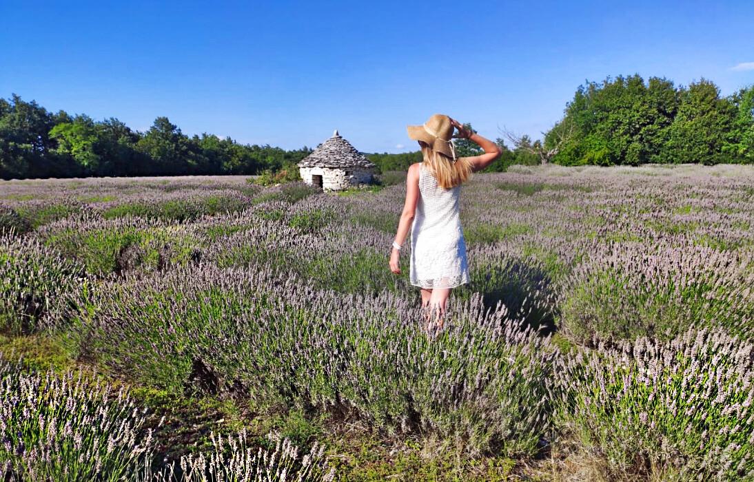 polja lavande Istra putovanje