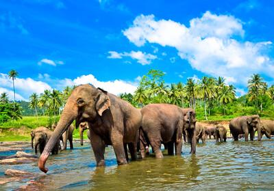 Šri Lanka, Pinnawala