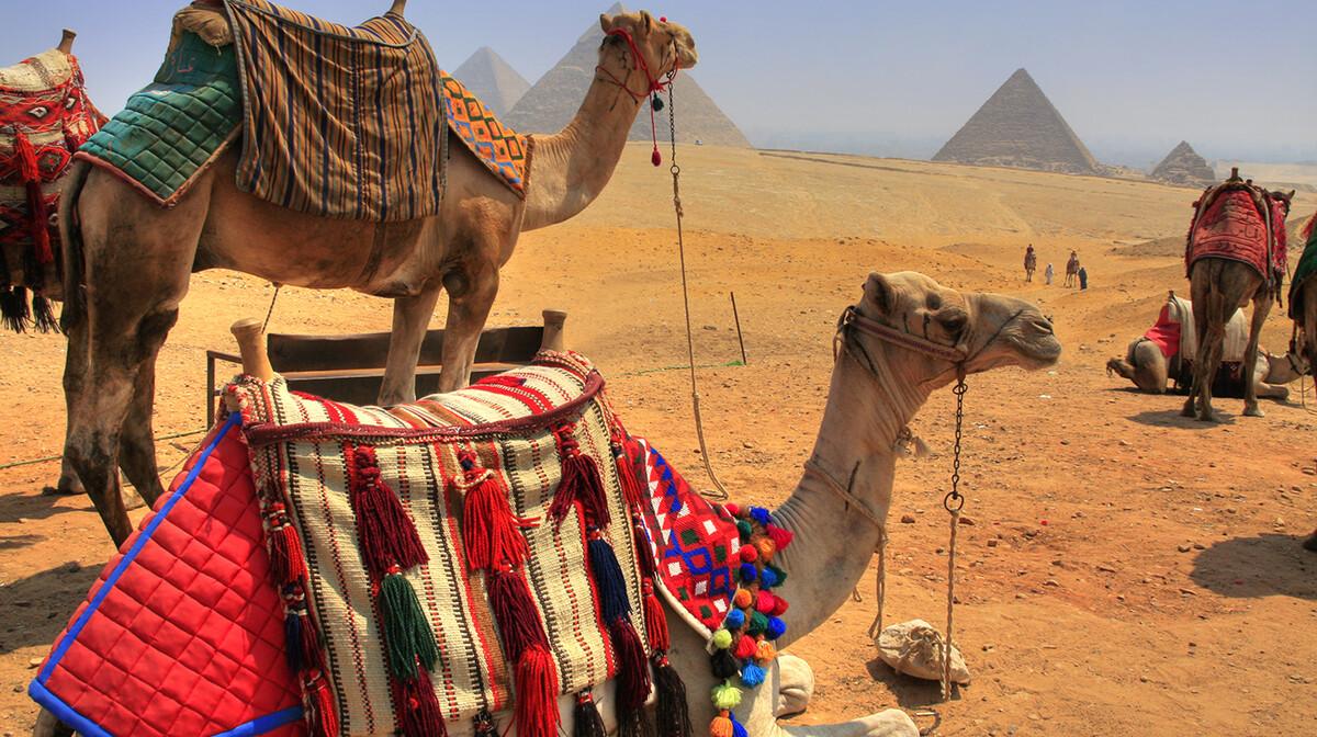 Deve i piramide u Gizi, putovanje i ljetovanje Egipat, krstarenje medietran, garantirani polasci