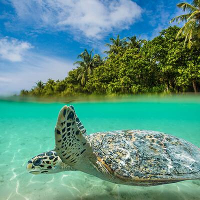Maldivi, morska kornjača, putovanje na Maldive, grupni polasci, daleka putovanja