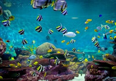 More - koraljni greben