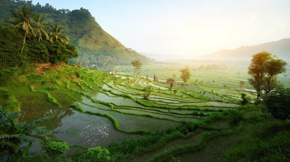 Rižina polja na Baliju, putovanja zrakoplovom, Mondo travel, daleka putovanja, garantirani polazak